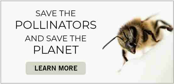 Save the Pollinators and Save the Planet